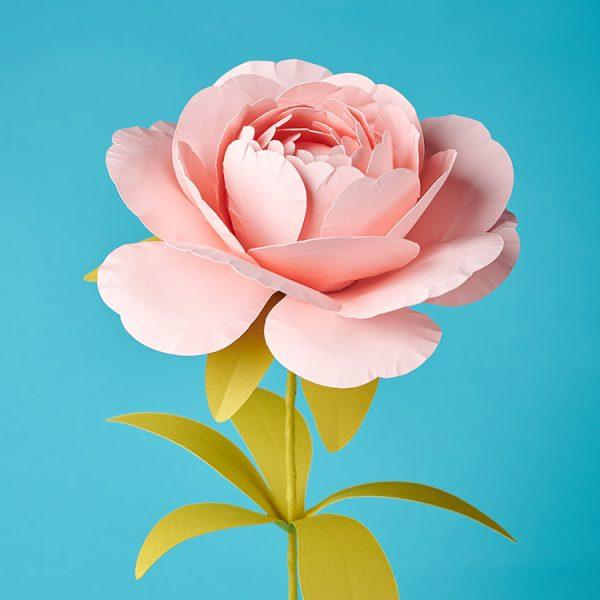 Pink handmade paper peony