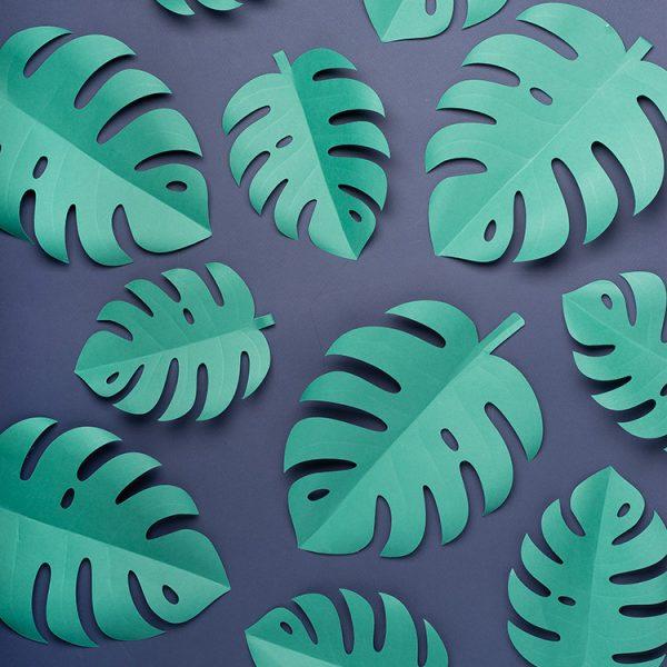 Monstera paper leaves